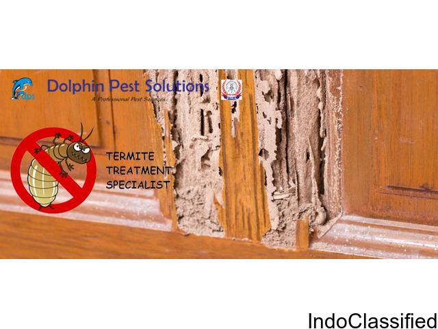 Book Pest Control Services Online | Dolphin Pest Solutions