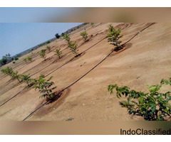 Live with Nature! Urban farming Community Farmland with Red Sandalwood,